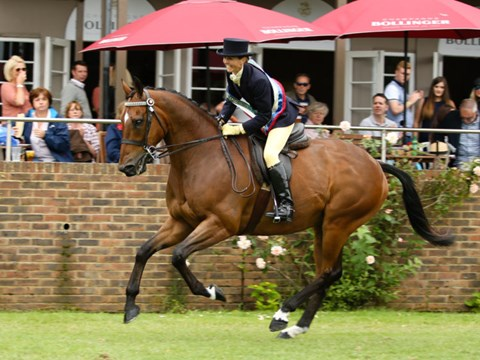 The RoR Tattersalls Thoroughbred Show Series Championship